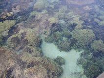 Κοραλλιογενής ύφαλος Στοκ εικόνα με δικαίωμα ελεύθερης χρήσης