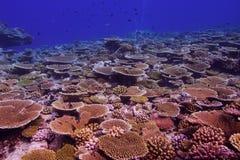 Κοραλλιογενής ύφαλος Στοκ Φωτογραφίες
