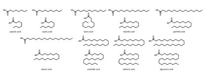 Κορεσμένα λιπαρά οξέα (θέστε): καπρυλικός, όξινος, capri ελεύθερη απεικόνιση δικαιώματος