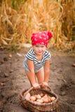 Κοριτσάκι στον κήπο με τη συγκομιδή των πατατών στο καλάθι κοντά στο ξηρό υπόβαθρο καλαμποκιού τομέων Βρώμικο παιδί στο κόκκινο b Στοκ φωτογραφίες με δικαίωμα ελεύθερης χρήσης