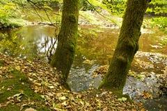 Κορμοί δέντρων κατά μήκος του ποταμού Στοκ φωτογραφία με δικαίωμα ελεύθερης χρήσης