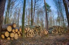Κορμοί δέντρων κορμών Στοκ Φωτογραφίες