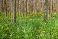 Κορμοί δέντρων στην πρασινάδα Στοκ φωτογραφία με δικαίωμα ελεύθερης χρήσης