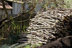 Κορμοί δέντρων της Apple Στοκ Εικόνα