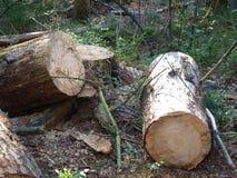 Κορμοί δέντρων Στοκ φωτογραφία με δικαίωμα ελεύθερης χρήσης