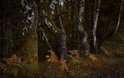 Κορμοί δέντρων Στοκ εικόνα με δικαίωμα ελεύθερης χρήσης