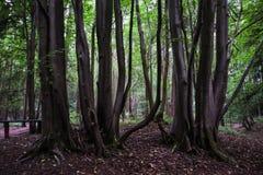Κορμοί δέντρων Στοκ Φωτογραφία