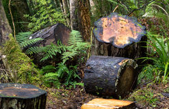 Κορμοί στη βλάστηση Στοκ φωτογραφία με δικαίωμα ελεύθερης χρήσης