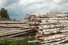 Κορμοί της περικοπής δέντρων Στοκ φωτογραφία με δικαίωμα ελεύθερης χρήσης