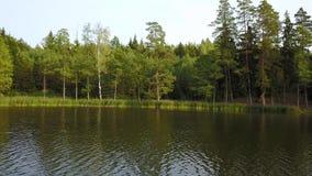 Κορμοί των δέντρων που απεικονίζονται στο ήρεμο νερό της λίμνης Εναέρια έρευνα απόθεμα βίντεο