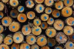 κορμοί Στοκ φωτογραφίες με δικαίωμα ελεύθερης χρήσης