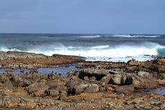 Κορμοράνοι στην ακτή του ακρωτηρίου της καλής ελπίδας Στοκ φωτογραφία με δικαίωμα ελεύθερης χρήσης