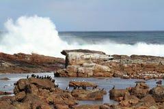 Κορμοράνοι στην ακτή του ακρωτηρίου της καλής ελπίδας Στοκ Εικόνες