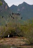 Κορμοράνος, μαύρα πουλιά στο δέντρο, Ταϊλάνδη. Στοκ εικόνες με δικαίωμα ελεύθερης χρήσης