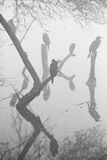 Κορμοράνος σκαρφαλωμένος Στοκ εικόνες με δικαίωμα ελεύθερης χρήσης