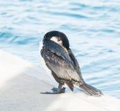 Κορμοράνος στη μαρίνα Στοκ φωτογραφία με δικαίωμα ελεύθερης χρήσης