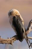 κορμοράνος στοκ φωτογραφία