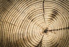 Κορμός δέντρων αποκοπών Στοκ φωτογραφίες με δικαίωμα ελεύθερης χρήσης