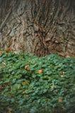 Κορμός δέντρων και πράσινα φύλλα Στοκ Εικόνες