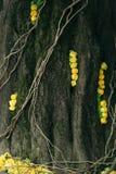Κορμός δέντρων με τα κίτρινα τριαντάφυλλα Στοκ Εικόνες
