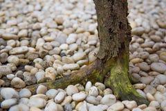 Κορμός δέντρων με τις πέτρες Στοκ Φωτογραφία