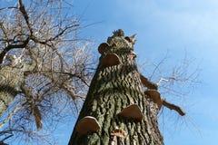 κορμός δέντρων με τους μύκητες υποστηριγμάτων Στοκ Φωτογραφίες