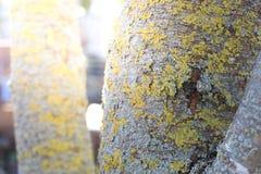 Κορμός δέντρων με το βρύο Στοκ φωτογραφία με δικαίωμα ελεύθερης χρήσης