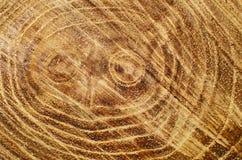 Κορμός δέντρων περικοπών Στοκ εικόνες με δικαίωμα ελεύθερης χρήσης