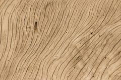κορμός δέντρων που ξεπερν&io Στοκ φωτογραφία με δικαίωμα ελεύθερης χρήσης