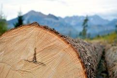 Κορμός δέντρων στα βουνά Στοκ Φωτογραφία