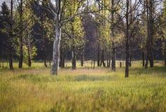Κορμός δέντρων στην ανατολή Στοκ φωτογραφία με δικαίωμα ελεύθερης χρήσης