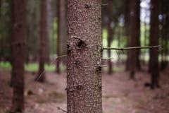 Κορμός δέντρων Στοκ φωτογραφία με δικαίωμα ελεύθερης χρήσης