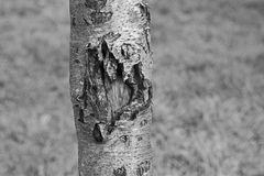 Κορμός δέντρων Στοκ Φωτογραφία