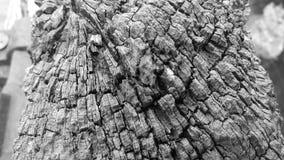 Κορμός δέντρων Delapidated Στοκ Εικόνα