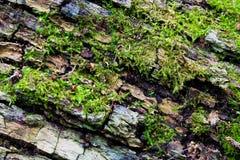 κορμός δέντρων βρύου Στοκ φωτογραφία με δικαίωμα ελεύθερης χρήσης