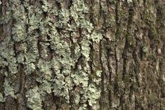 κορμός δέντρων λειχήνων Στοκ φωτογραφία με δικαίωμα ελεύθερης χρήσης