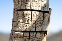 κορμός δέντρων λεπτομέρει& Στοκ φωτογραφία με δικαίωμα ελεύθερης χρήσης