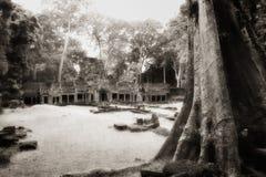 κορμός δέντρων ναών angkor στοκ εικόνες με δικαίωμα ελεύθερης χρήσης