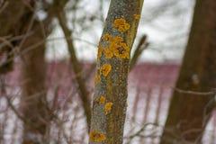 Κορμός δέντρων που καλύπτεται με την κίτρινους λειχήνα και το μύκητα στοκ φωτογραφία με δικαίωμα ελεύθερης χρήσης