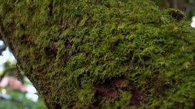 Κορμός δέντρων που καλύπτεται με το βρύο και την πρασινάδα φιλμ μικρού μήκους