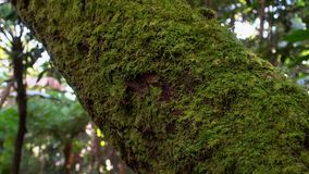 Κορμός δέντρων που καλύπτεται με το βρύο και την πρασινάδα απόθεμα βίντεο