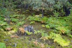 Κορμός δέντρων που περιβάλλεται από τις φτέρες στοκ φωτογραφία