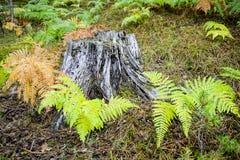 Κορμός δέντρων που περιβάλλεται από τις φτέρες στοκ φωτογραφία με δικαίωμα ελεύθερης χρήσης