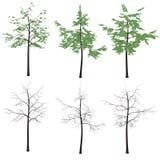 κορμός δέντρων σκιαγραφιών τυπωμένων υλών φύλλων Απεικόνιση αποθεμάτων