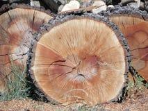 κορμός δέντρων τμημάτων Στοκ Φωτογραφίες
