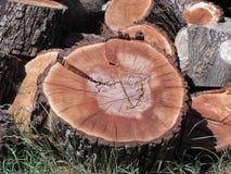 κορμός δέντρων τμημάτων Στοκ εικόνες με δικαίωμα ελεύθερης χρήσης