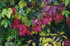 Κορμός δέντρων φθινοπώρου που χρωματίζεται με τα χρωματισμένα φύλλα στοκ εικόνα