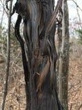 Κορμός δέντρων, χαλασμένος μαύρος φλοιός, κινηματογράφηση σε πρώτο πλάνο autumnal forest Στοκ εικόνα με δικαίωμα ελεύθερης χρήσης