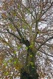 Κορμός δέντρων Στοκ Φωτογραφίες