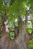 κορμός δέντρων στοκ εικόνες με δικαίωμα ελεύθερης χρήσης